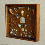 Shell Shadow Box - Oak